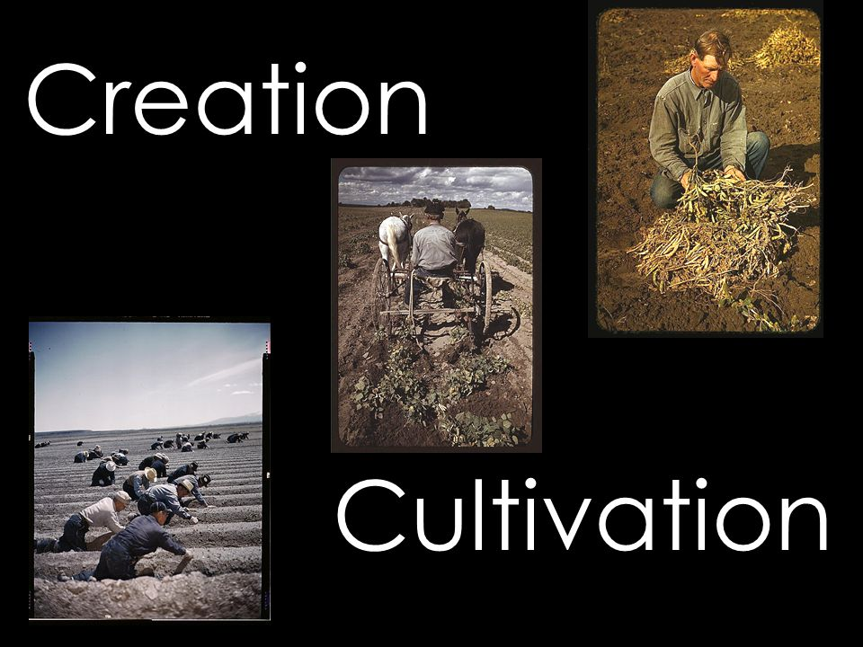 Creation Cultivation
