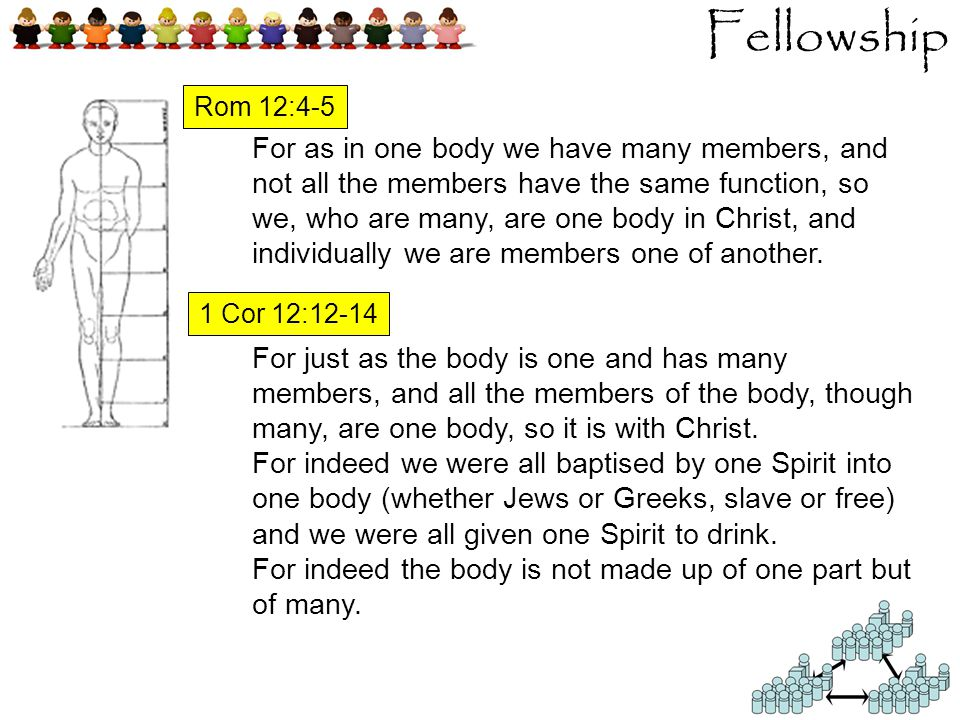 Fellowship For as in one body we have many members, and not all the members have the same function, so we, who are many, are one body in Christ, and individually we are members one of another.