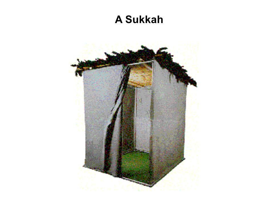 A Sukkah