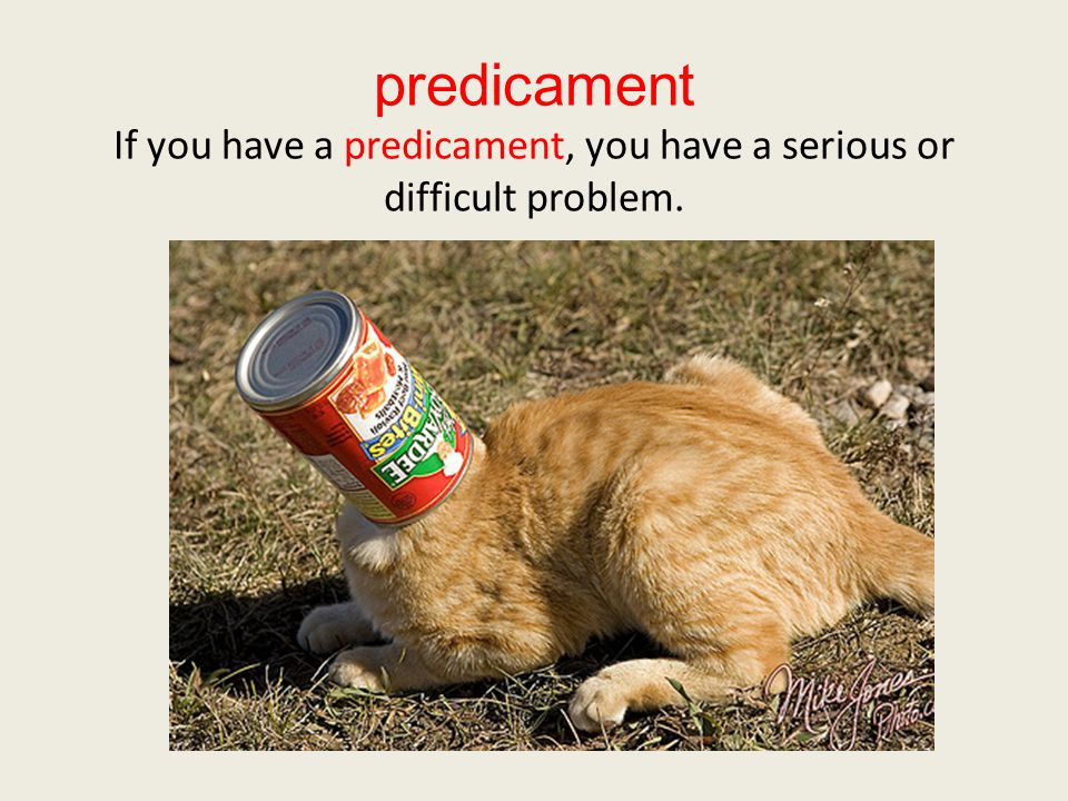 predicament If you have a predicament, you have a serious or difficult problem.