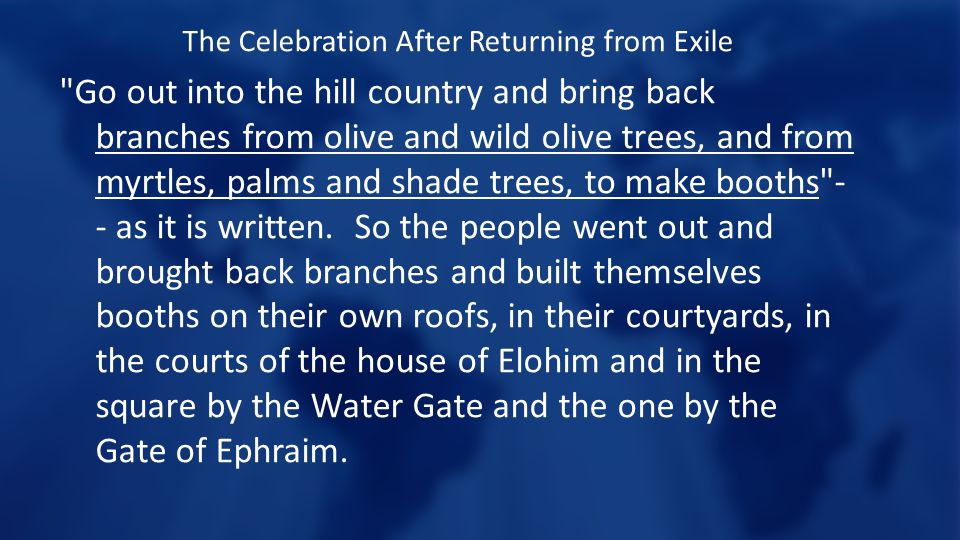 The Celebration After Returning from Exile Go out into the hill country and bring back branches from olive and wild olive trees, and from myrtles, palms and shade trees, to make booths - - as it is written.
