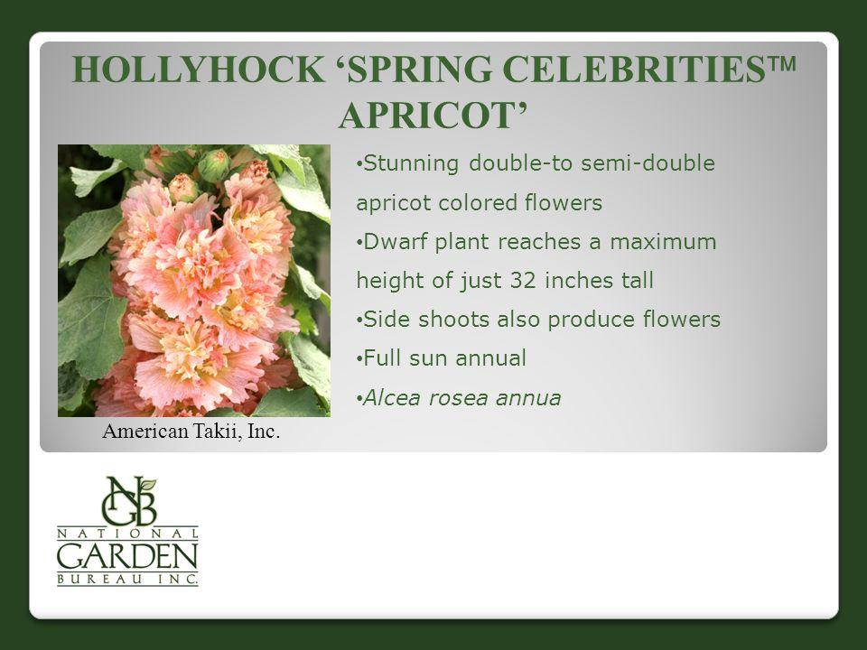 HOLLYHOCK 'SPRING CELEBRITIES  APRICOT' American Takii, Inc.
