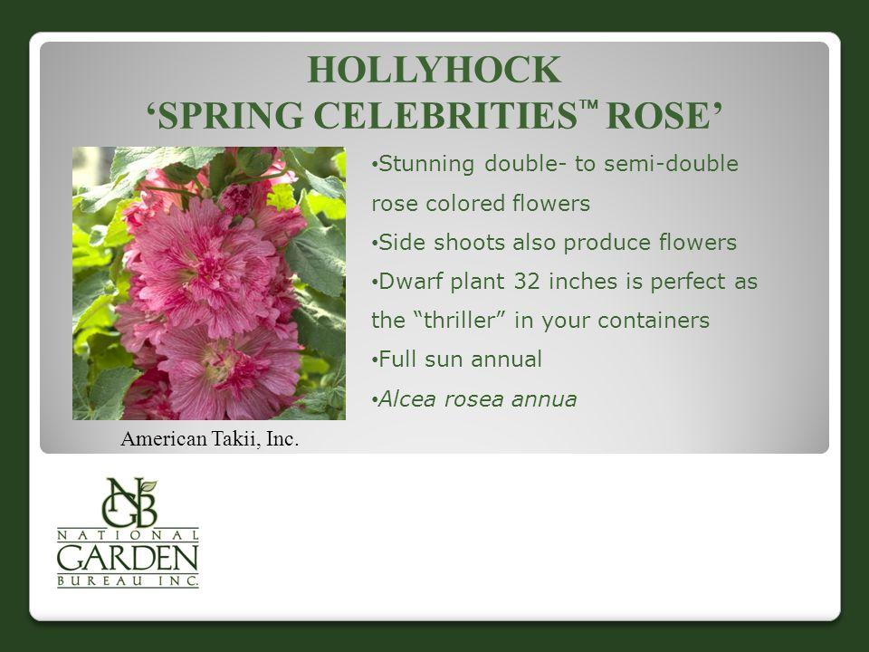 HOLLYHOCK 'SPRING CELEBRITIES  ROSE' American Takii, Inc.