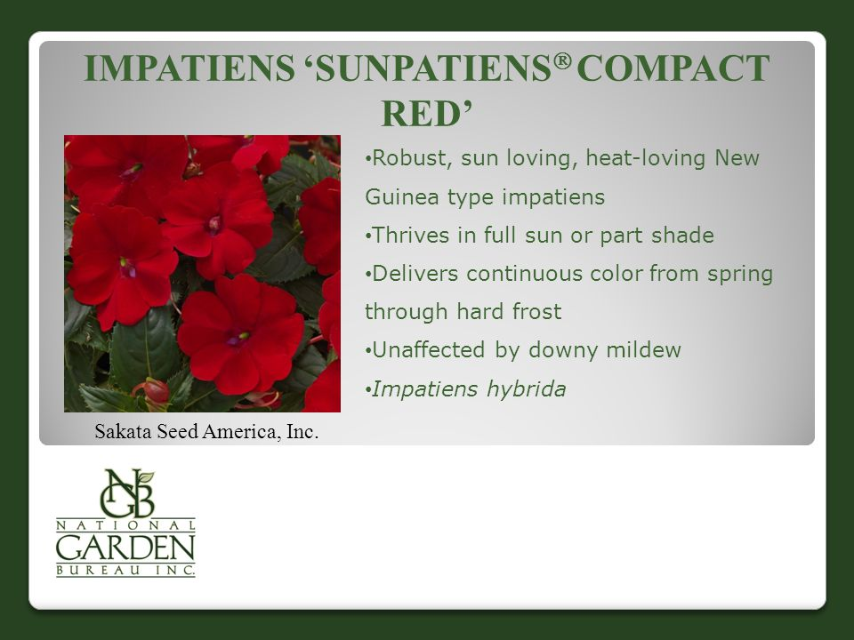 IMPATIENS 'SUNPATIENS  COMPACT RED' Sakata Seed America, Inc. Robust, sun loving, heat-loving New Guinea type impatiens Thrives in full sun or part s