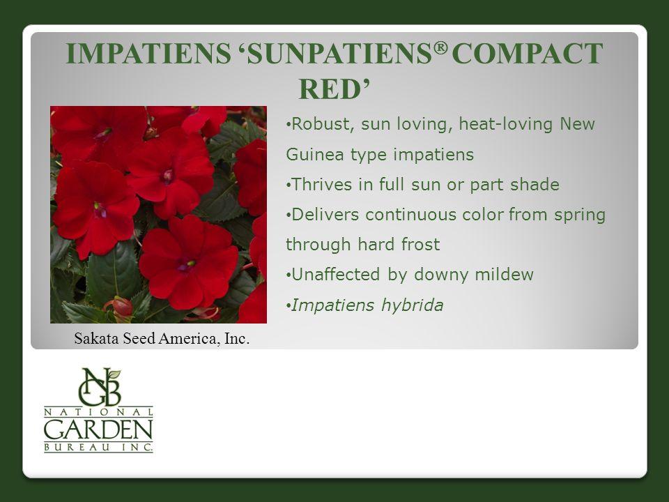 IMPATIENS 'SUNPATIENS  COMPACT RED' Sakata Seed America, Inc.