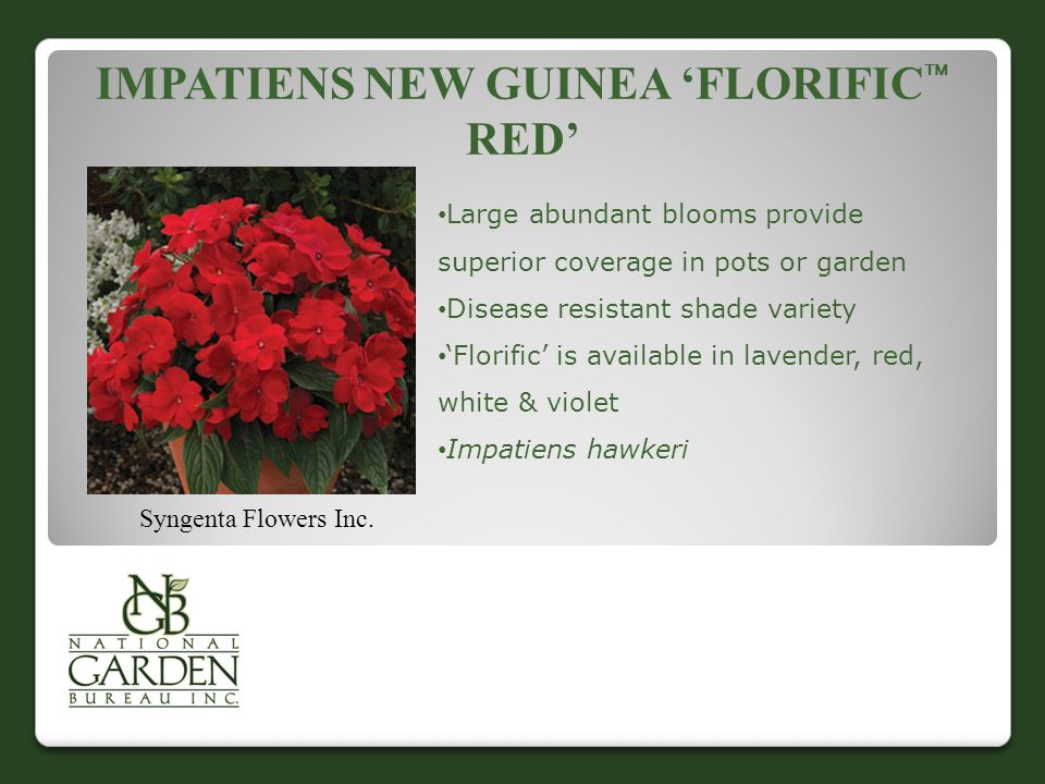 IMPATIENS NEW GUINEA 'FLORIFIC  RED' Syngenta Flowers Inc.
