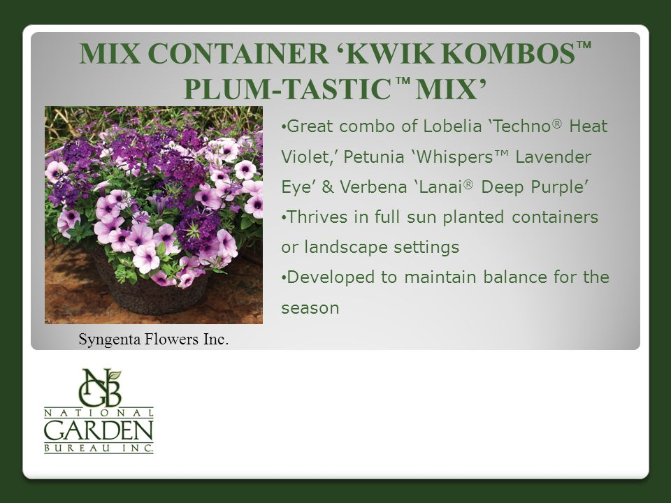 MIX CONTAINER 'KWIK KOMBOS  PLUM-TASTIC  MIX' Syngenta Flowers Inc. Great combo of Lobelia 'Techno ® Heat Violet,' Petunia 'Whispers™ Lavender Eye'