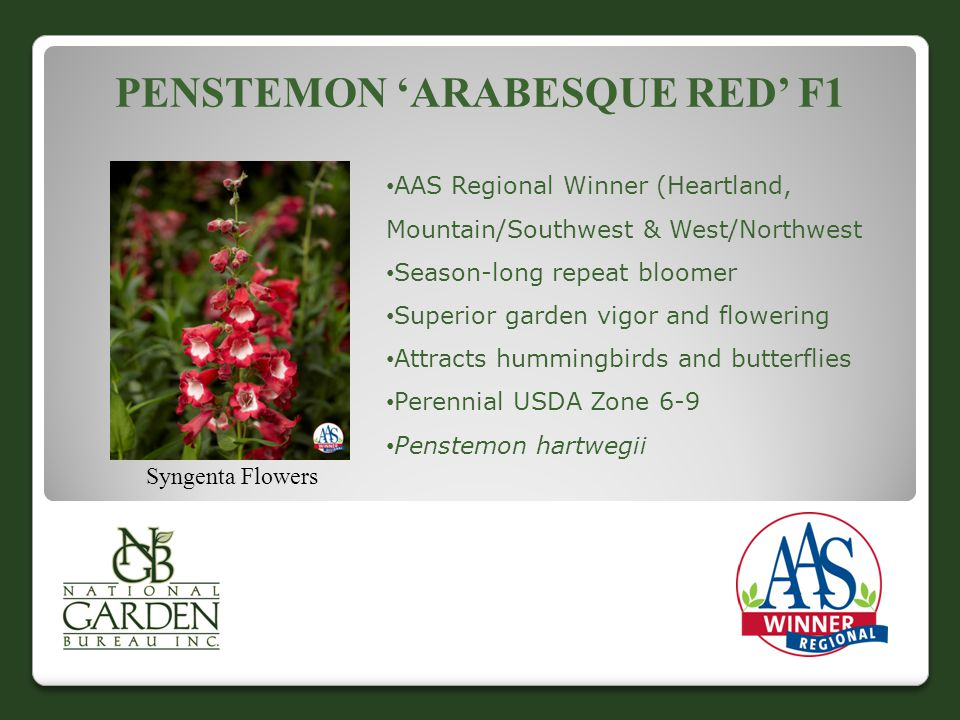 PENSTEMON 'ARABESQUE RED' F1 Syngenta Flowers AAS Regional Winner (Heartland, Mountain/Southwest & West/Northwest Season-long repeat bloomer Superior garden vigor and flowering Attracts hummingbirds and butterflies Perennial USDA Zone 6-9 Penstemon hartwegii