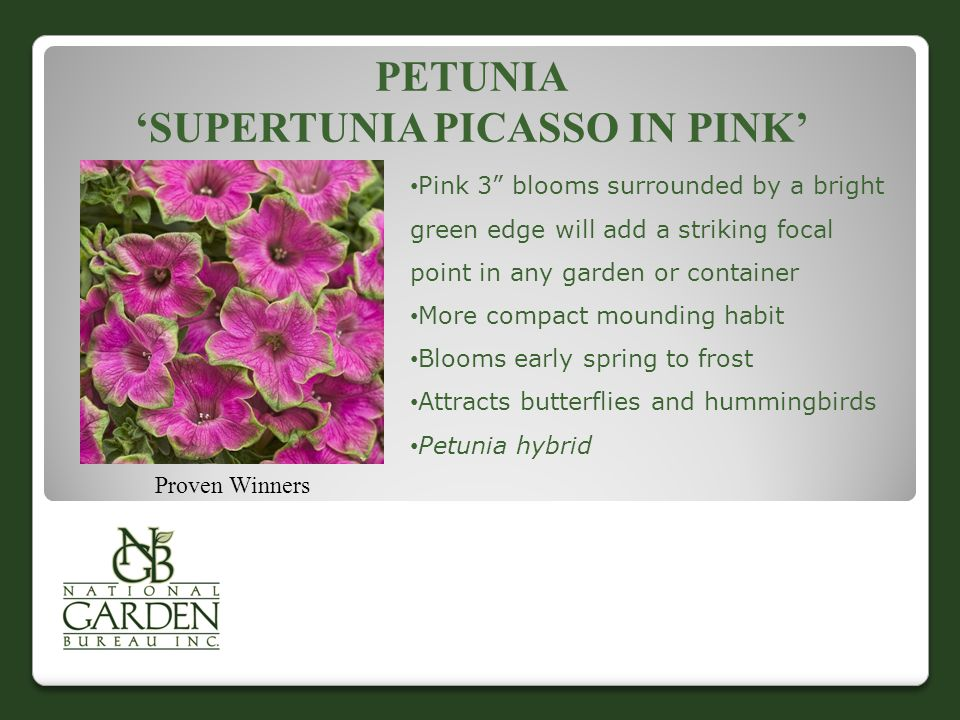 "PETUNIA 'SUPERTUNIA PICASSO IN PINK' Proven Winners Pink 3"" blooms surrounded by a bright green edge will add a striking focal point in any garden or"