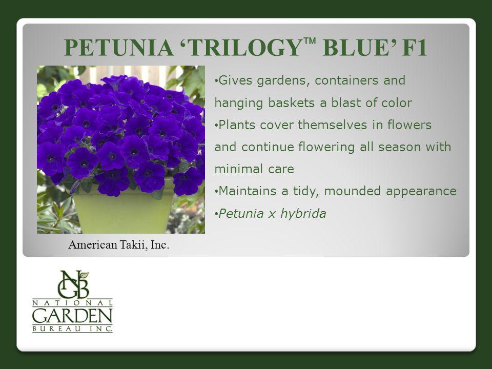 PETUNIA 'TRILOGY  BLUE' F1 American Takii, Inc.