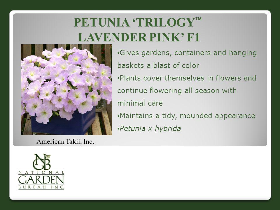 PETUNIA 'TRILOGY  LAVENDER PINK' F1 American Takii, Inc.