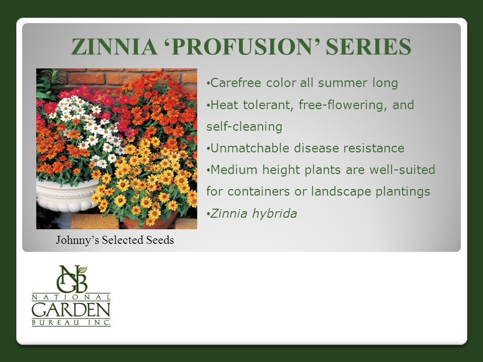ZINNIA 'PROFUSION' SERIES Johnny's Selected Seeds Carefree color all summer long Heat tolerant, free-flowering, and self-cleaning Unmatchable disease resistance Medium height plants are well-suited for containers or landscape plantings Zinnia hybrida