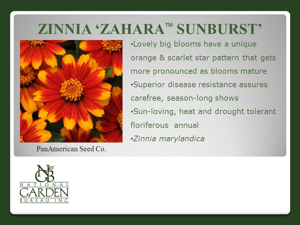 ZINNIA 'ZAHARA  SUNBURST' PanAmerican Seed Co.