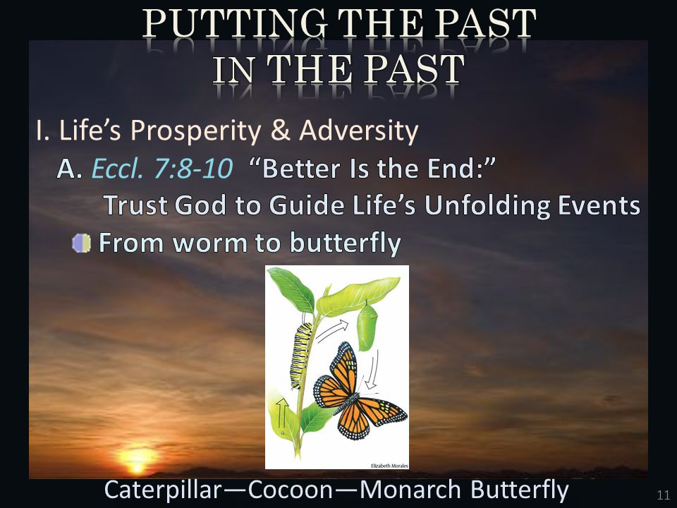 11 Caterpillar—Cocoon—Monarch Butterfly