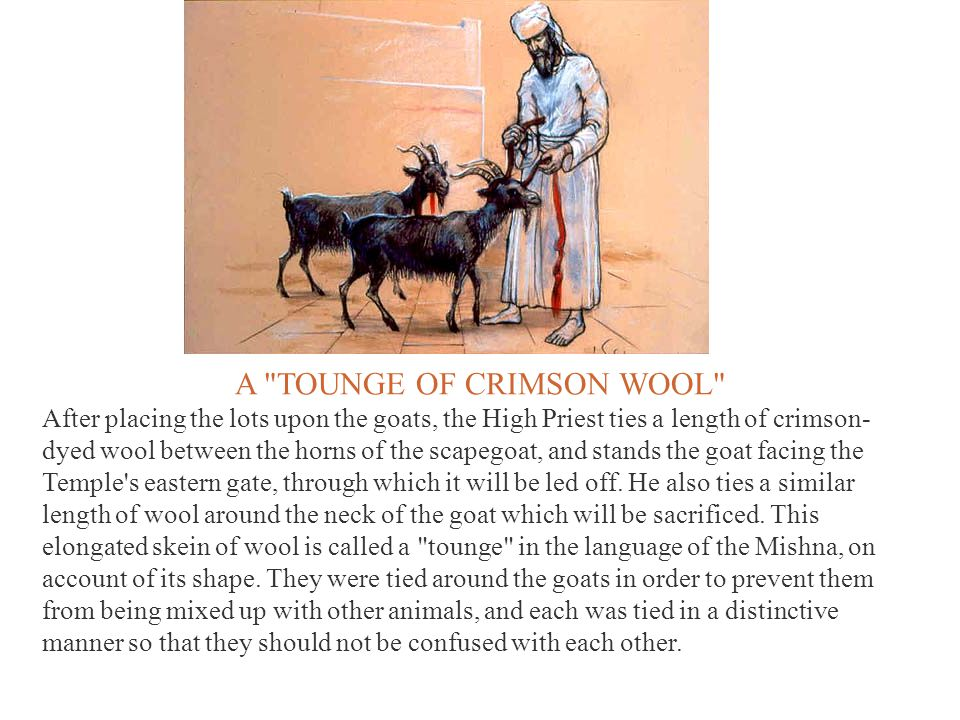 A TOUNGE OF CRIMSON WOOL After placing the lots upon the goats, the High Priest ties a length of crimson- dyed wool between the horns of the scapegoat, and stands the goat facing the Temple s eastern gate, through which it will be led off.