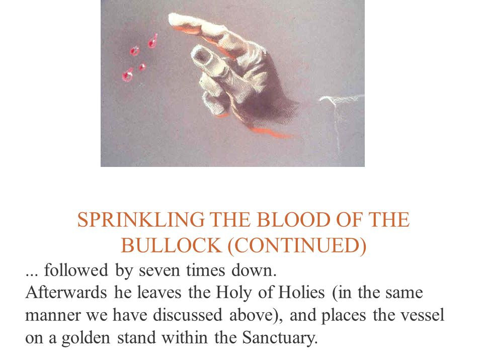 SPRINKLING THE BLOOD OF THE BULLOCK (CONTINUED)... followed by seven times down. Afterwards he leaves the Holy of Holies (in the same manner we have d