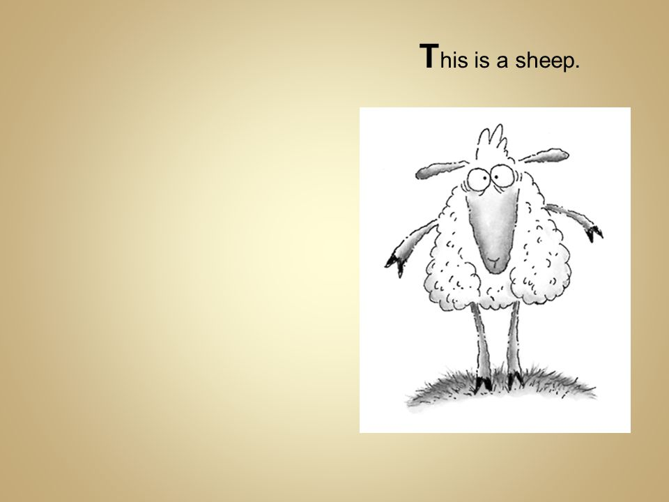 T his is a sheep.