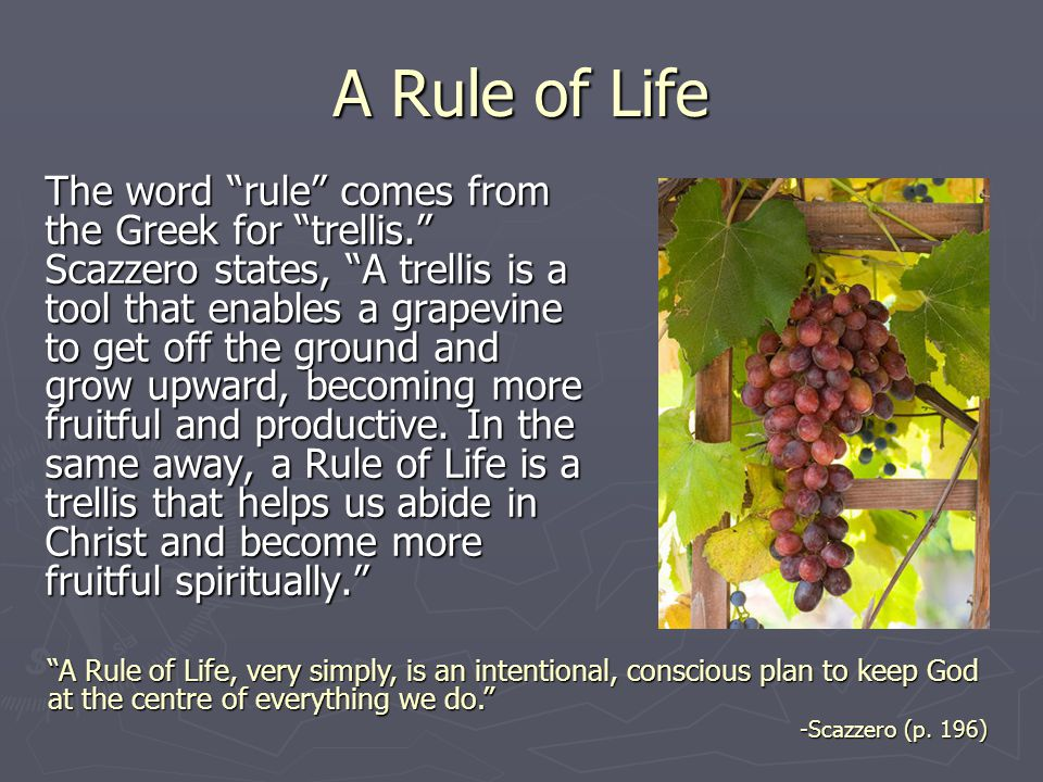 "A Rule of Life The word ""rule"" comes from the Greek for ""trellis."" Scazzero states, ""A trellis is a tool that enables a grapevine to get off the groun"