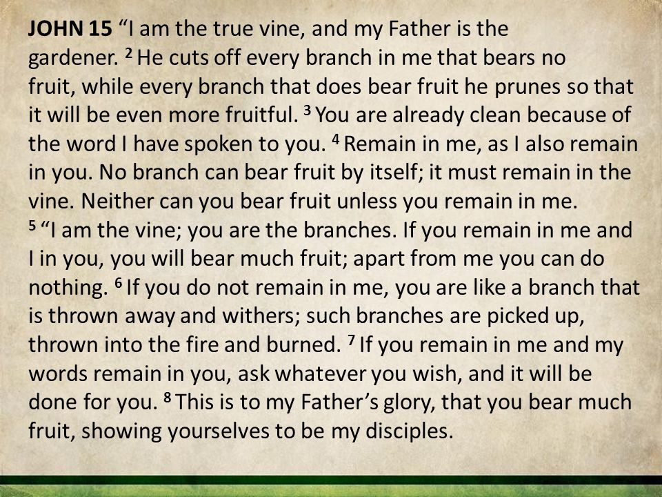 "JOHN 15 ""I am the true vine, and my Father is the gardener. 2 He cuts off every branch in me that bears no fruit, while every branch that does bear fr"
