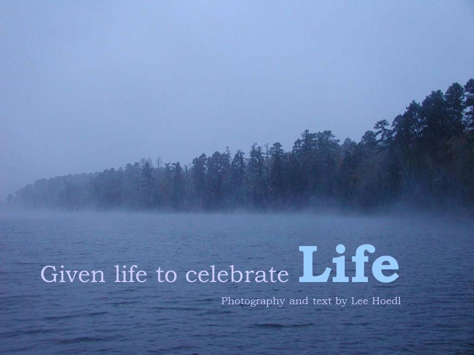 Given life to celebrate Life Photography and text by Lee Hoedl