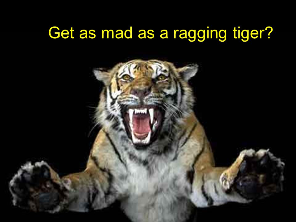 Get as mad as a ragging tiger