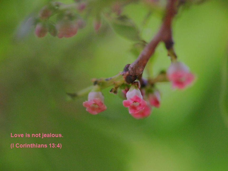 Love is not jealous. (I Corinthians 13:4)