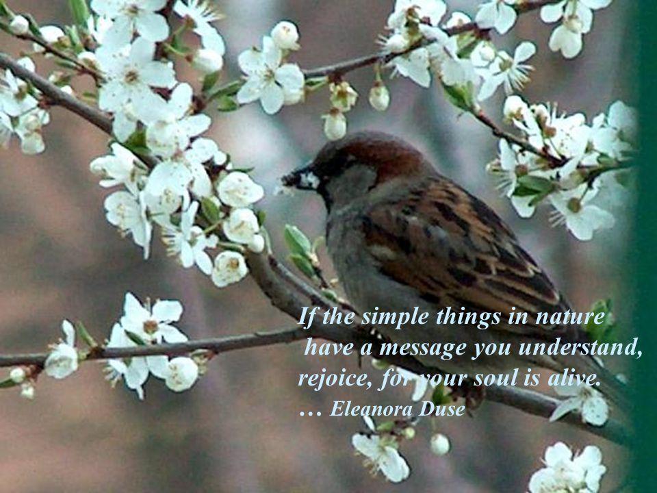 simply spring …me