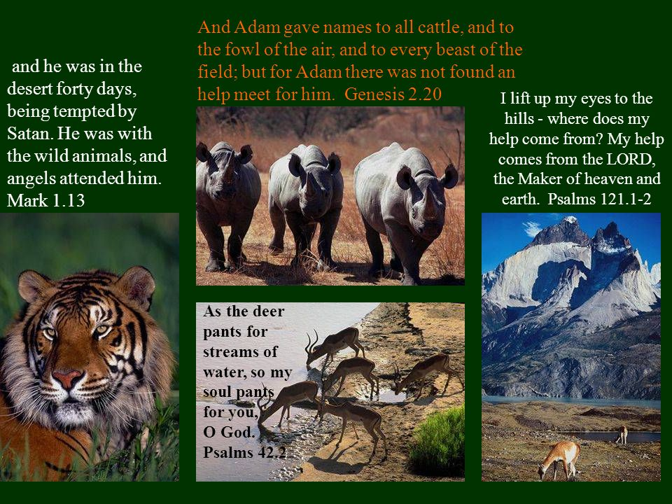 And Adam gave names to all cattle, and to the fowl of the air, and to every beast of the field; but for Adam there was not found an help meet for him.