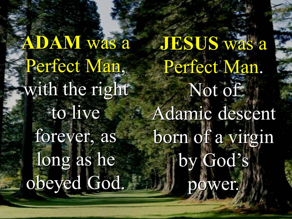 ADAM was a Perfect Man, with the right to live forever, as long as he obeyed God.