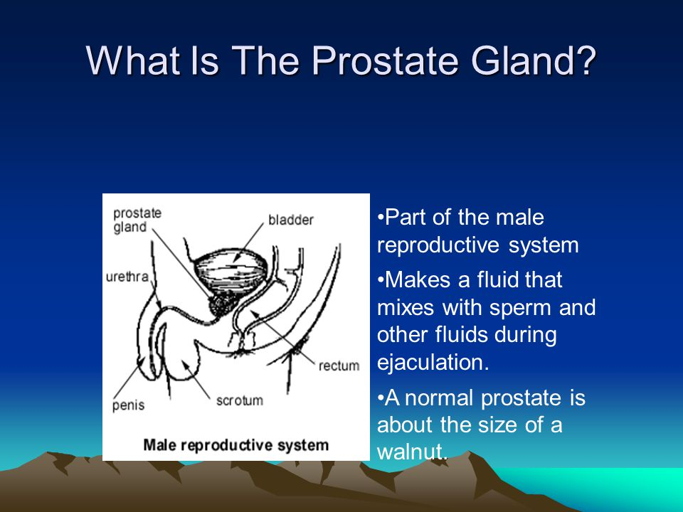 What Is The Prostate Gland? Part of the male reproductive system Makes a fluid that mixes with sperm and other fluids during ejaculation. A normal pro