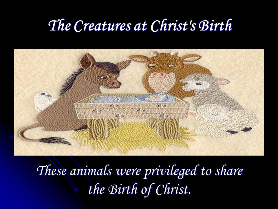The Creatures at Christ s Birth These animals were privileged to share the Birth of Christ.
