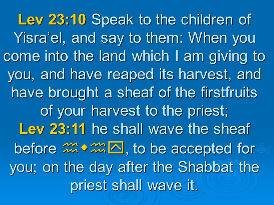 Lev 23:10 Speak to the children of Yisra'el, and say to them: When you come into the land which I am giving to you, and have reaped its harvest, and have brought a sheaf of the firstfruits of your harvest to the priest; Lev 23:11 he shall wave the sheaf before hwhy, to be accepted for you; on the day after the Shabbat the priest shall wave it.