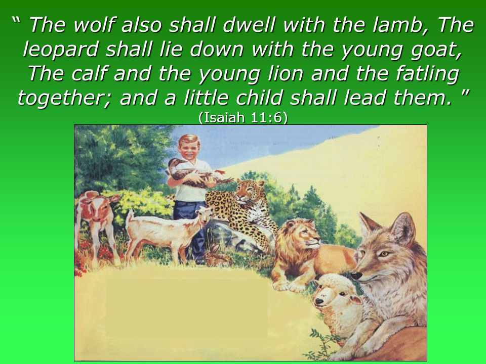 www.korbible.net The wolf also shall dwell with the lamb, The leopard shall lie down with the young goat, The calf and the young lion and the fatling together; and a little child shall lead them.