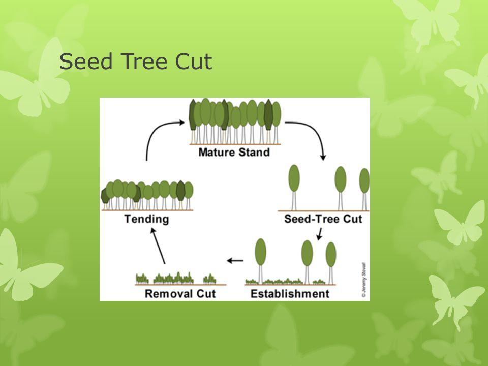 Seed Tree Cut