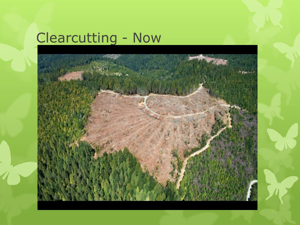 Clearcutting - Now