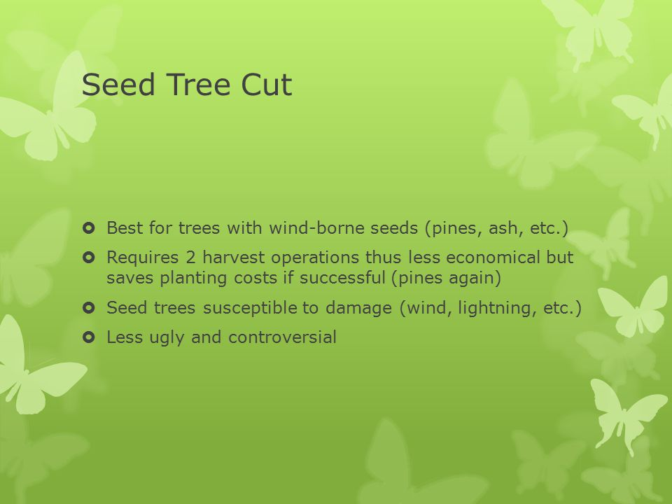Seed Tree Cut  Best for trees with wind-borne seeds (pines, ash, etc.)  Requires 2 harvest operations thus less economical but saves planting costs
