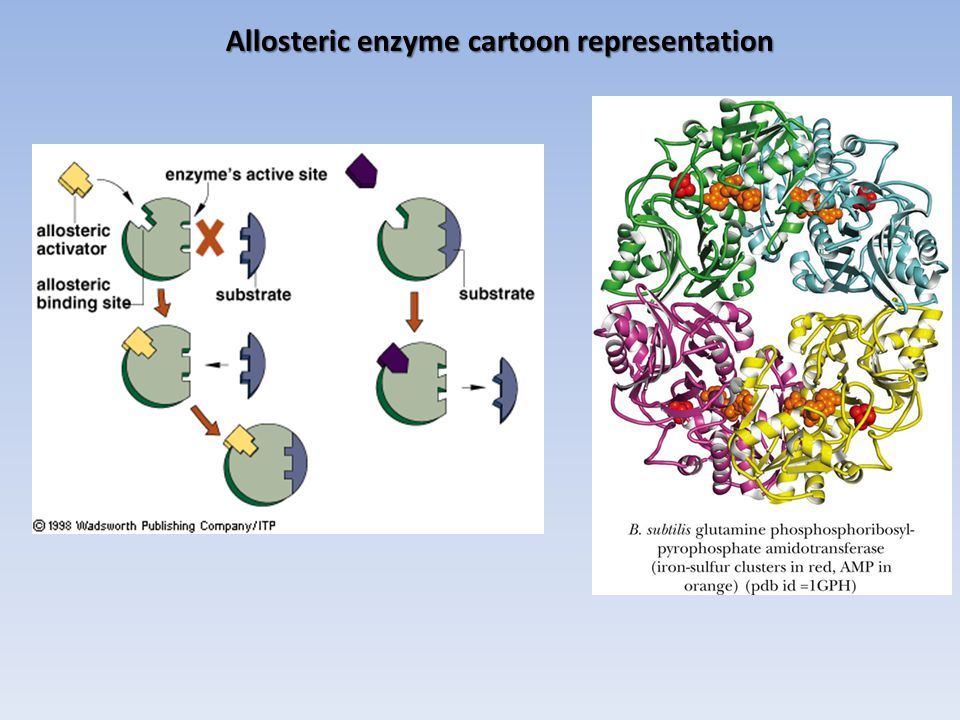 Allosteric enzyme cartoon representation