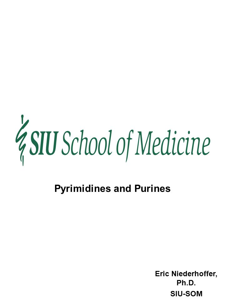 Eric Niederhoffer, Ph.D. SIU-SOM Pyrimidines and Purines