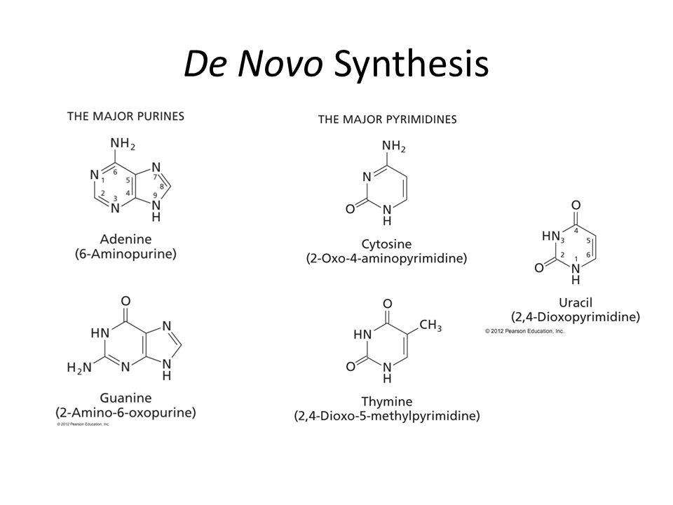 De Novo Synthesis