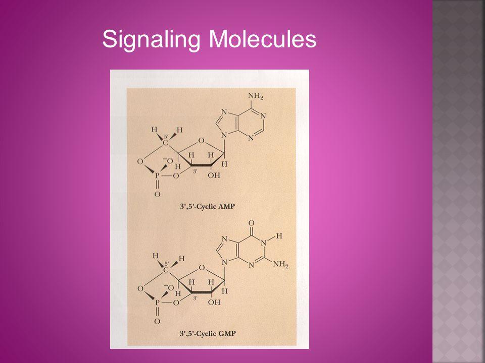 Signaling Molecules