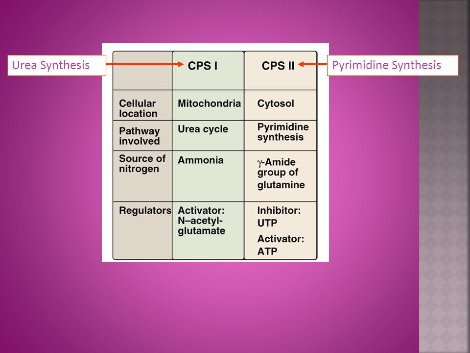 Pyrimidine SynthesisUrea Synthesis