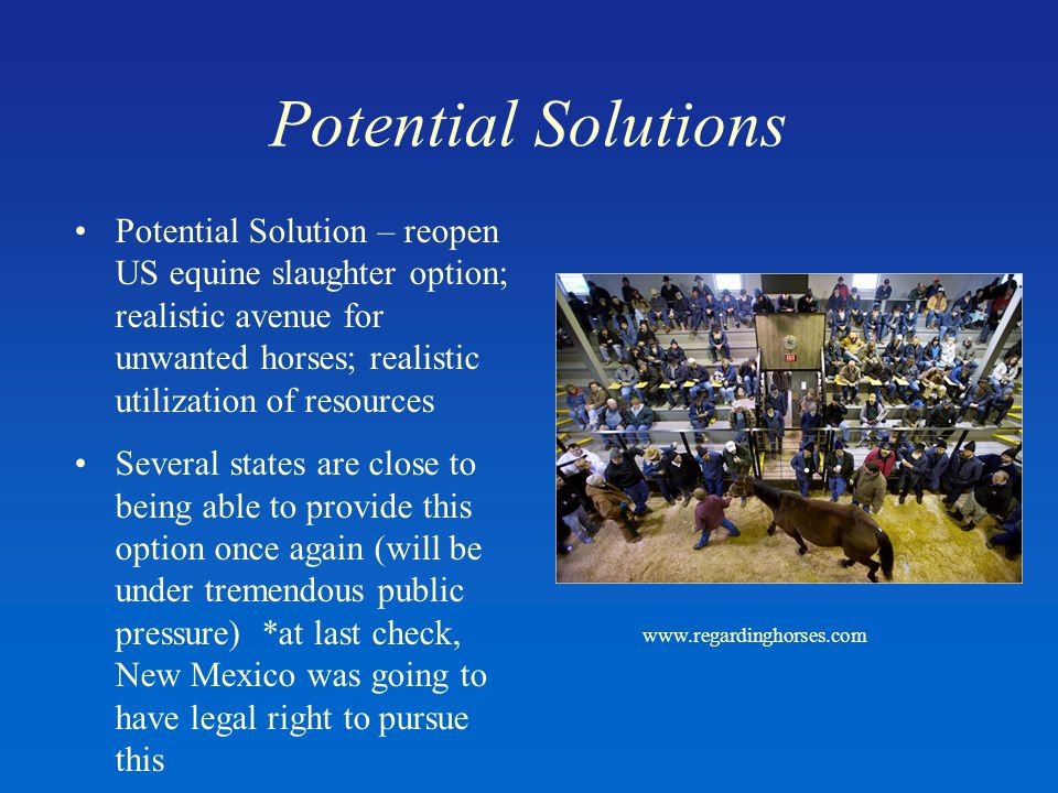 Potential Solutions Potential Solution – reopen US equine slaughter option; realistic avenue for unwanted horses; realistic utilization of resources Several states are close to being able to provide this option once again (will be under tremendous public pressure) *at last check, New Mexico was going to have legal right to pursue this www.regardinghorses.com