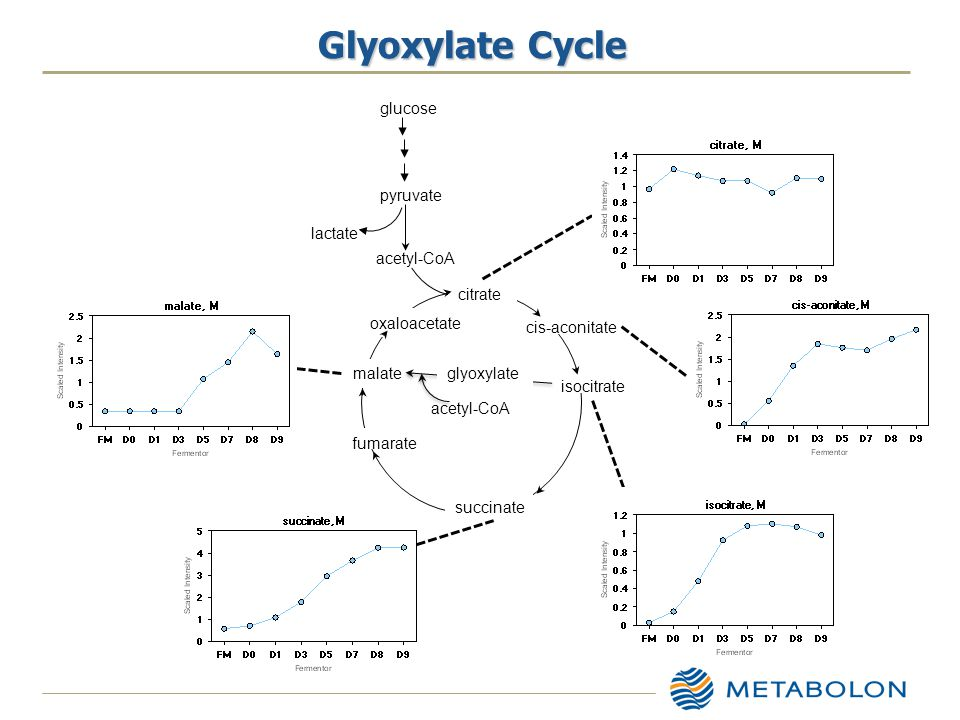 Glyoxylate Cycle pyruvate acetyl-CoA glucose lactate citrate cis-aconitate isocitrate succinate fumarate malate oxaloacetate glyoxylate acetyl-CoA