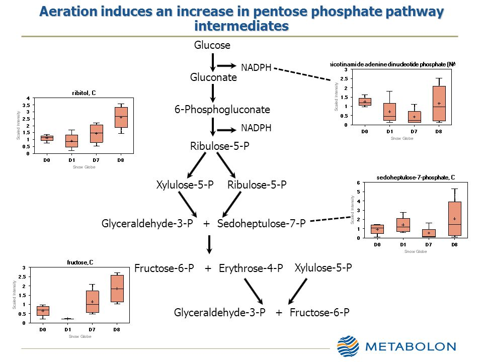 Aeration induces an increase in pentose phosphate pathway intermediates 6-Phosphogluconate Ribulose-5-P Xylulose-5-P Gluconate Glucose Glyceraldehyde-3-P + Sedoheptulose-7-P NADPH Fructose-6-P + Erythrose-4-P Xylulose-5-P Glyceraldehyde-3-P + Fructose-6-P
