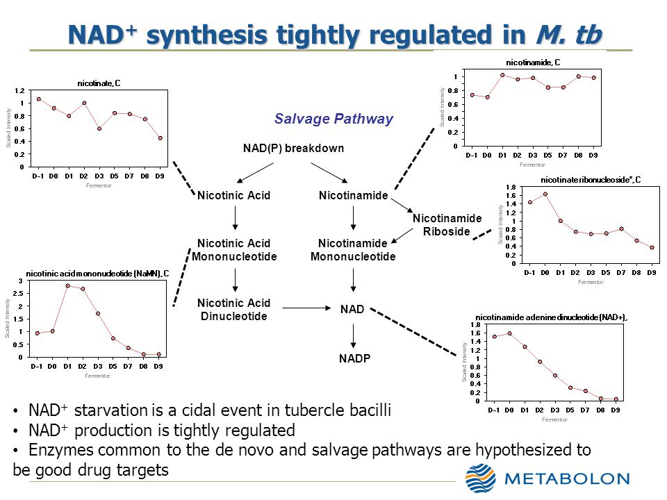NAD + synthesis tightly regulated in M.