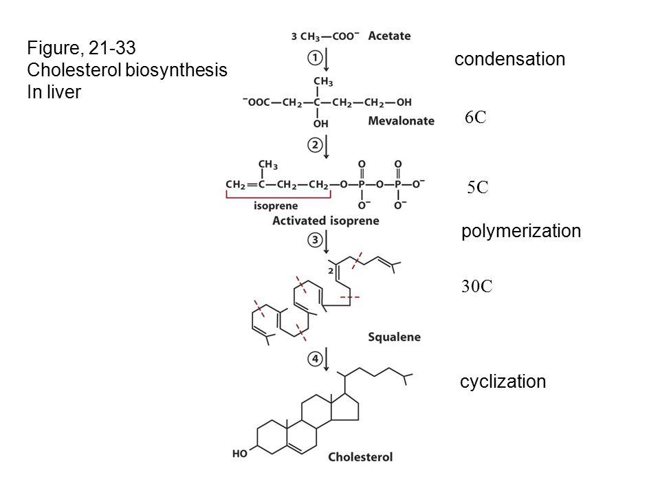 Figure, 21-33 Cholesterol biosynthesis In liver 6C 5C 30C condensation polymerization cyclization