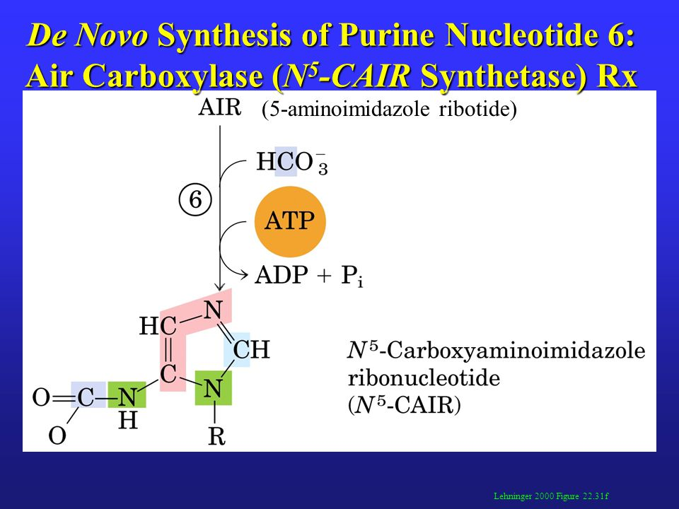 De Novo Synthesis of Purine Nucleotide 6: Air Carboxylase (N 5 -CAIR Synthetase) Rx Lehninger 2000 Figure 22.31f (5-aminoimidazole ribotide)