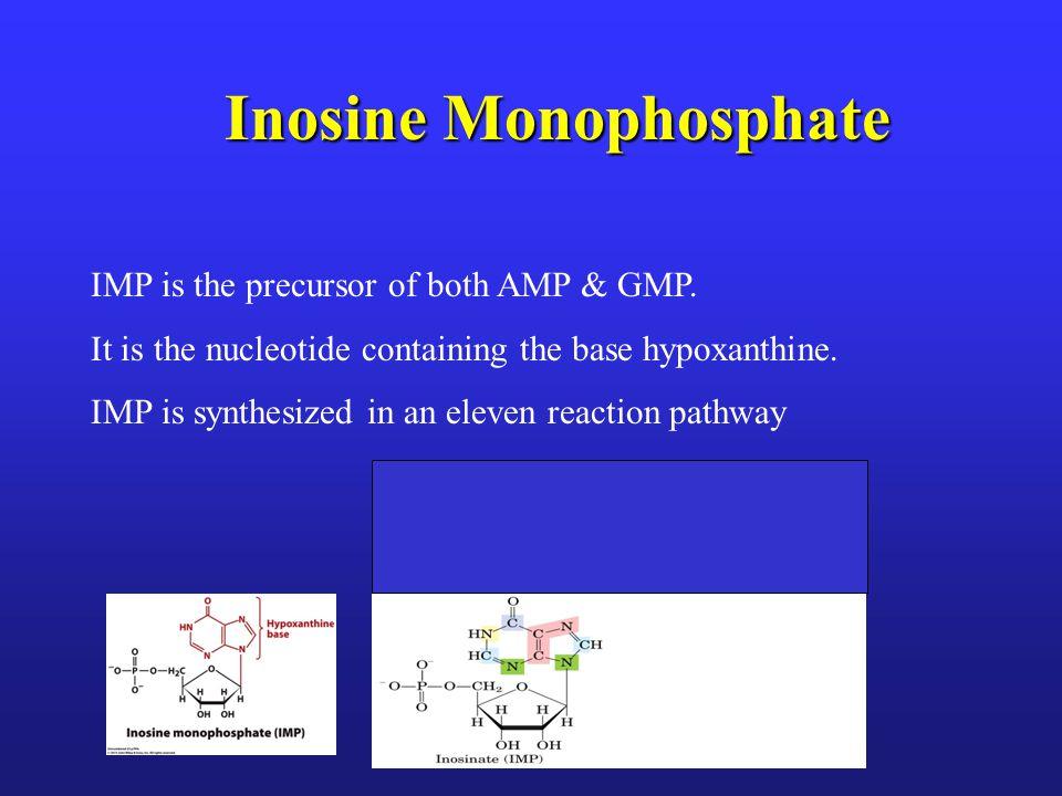 De novo Synthesis of IMP Voet, Voet & Pratt 2002 Fig 22.1 ; 2013 Figure 23.1