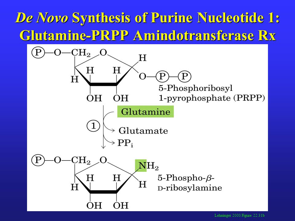 De Novo Synthesis of Purine Nucleotide 2: Amidophosphoribosyl Transferase Rx Lehninger 2000 Figure 22.31b