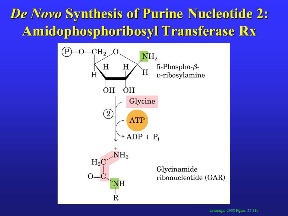 De Novo Synthesis of Purine Nucleotide 3: GAR Transformylase Rx Lehninger 2000 Figure 22.31c